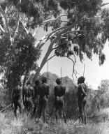 Aborigine hunters