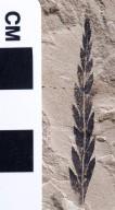PC111 - leaf