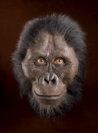 Reconstruction of hominid head Australopithecus afarensis