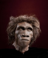 Reconstruction of hominid head Homo erectus