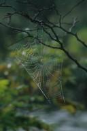 Web of orb weaver Spider (Araneidae)