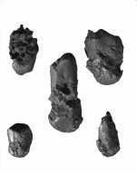 5 specimens from Estherville, Iowa