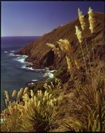 Windswept cliffs of Cape Reinga