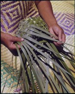 Weaving Maori food basket.