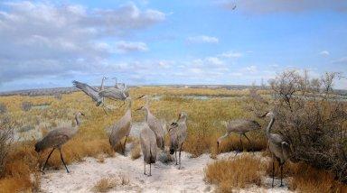 Monte Vista NW Refuge aka Sandhill Crane