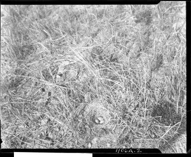 Eggs in nest