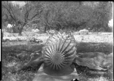 Barrel Cactus (top view)