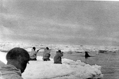 Hunting Walrus