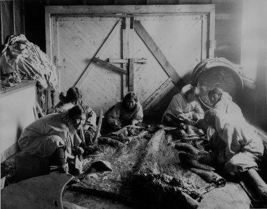 Splitting the bull walrus [hide]