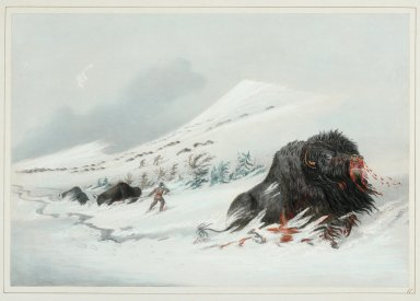 Buffalo Hunt. Dying Bull in a Snow-Drift.