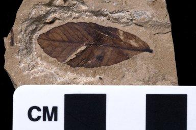 PC237 - leaf