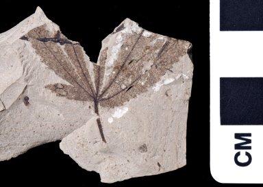 PC063 - leaf