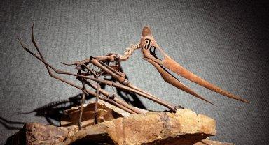 Pteranodon skeleton cast.