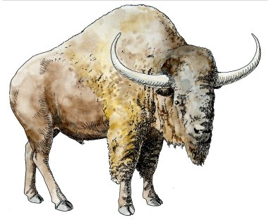 Bison, Ice Age Mammal