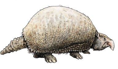 Glyptodont, Ice Age Mammal