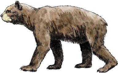 Short Faced Bear, Ice Age Mammal