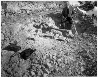 Excavating Diplodocus