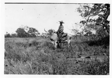 Riding a steer