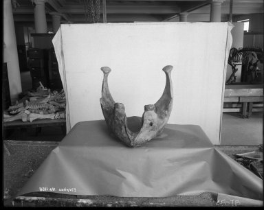 Elephant Mandible