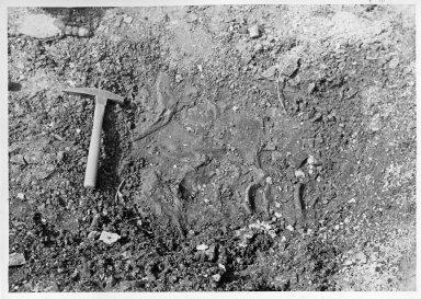Plesiosaur bones in situ