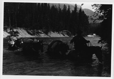 Rider and pack horses fording a river