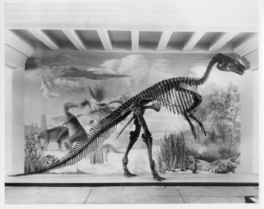 Articulated skeleton of Edmontosaurus annectens