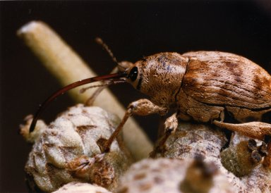 Close up of unidentified brown insect