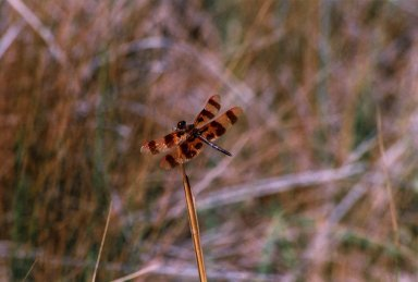 Close up of brown dragonfly