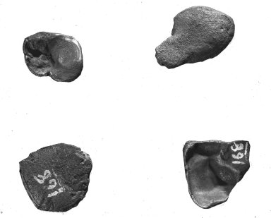 4 specimens from Estherville, Iowa