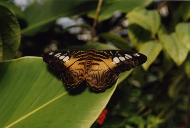 Close up of orange, yellow, and black butterfly on leaf