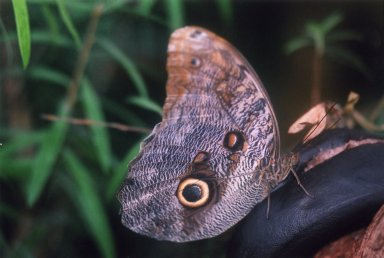 Close up of unidentified brown moth