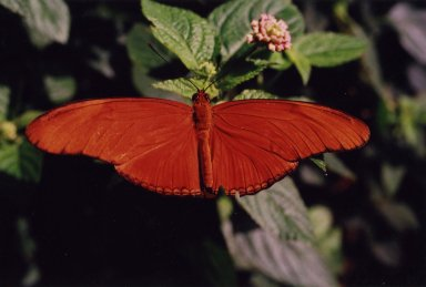 Close up of orange butterfly on green leaf