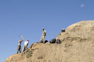 L-R: Dr. Ian Miller and David Allen, DMNS Volunteer, work on a dig site on the Kaiparowits Plateau while Dane Miller (right) looks on.
