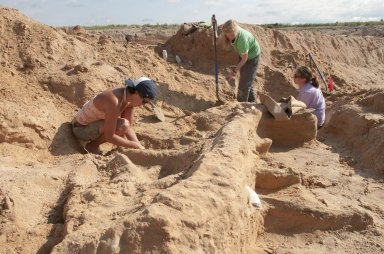 Stegomastodon excavation