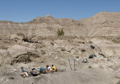 A wider view of an excavation site with the DMNS Team hard at work.