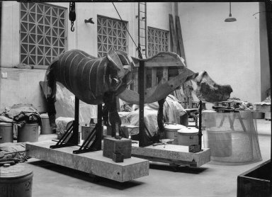 Wooden armature of a rhinoceros at The Field Museum