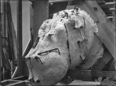 Head of a mount being prepared for an exhibit at The Field Museum in Chicago, Illinois.