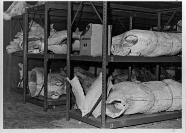 Taxidermy Molds in Storage
