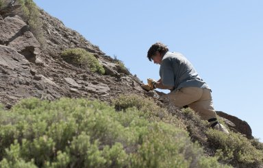 DMNS Volunteer Fritz Koether perches on the side of a hill as he examines a potential specimen.