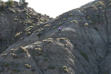 DMNS Staff Lesley Petrie perches on the side of a ridge as she excavates a fossil site.