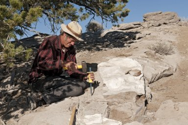 Dr. Bob Raynolds, DMNS Research Associate, carefully chisels out a fossil specimen on the Kaiparowits Plateau.