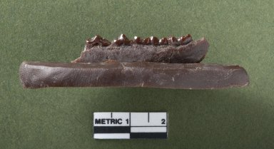 Diacodexus secans jaw, rotated side view