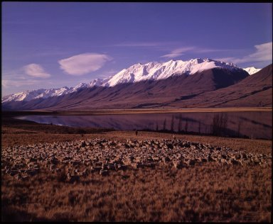 Autumn muster, Lake Ohau.
