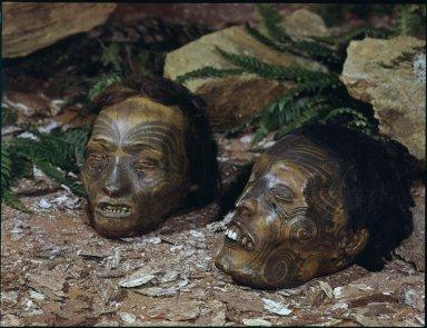 Dried Maori heads