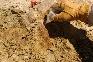 Picket Wire Excavation