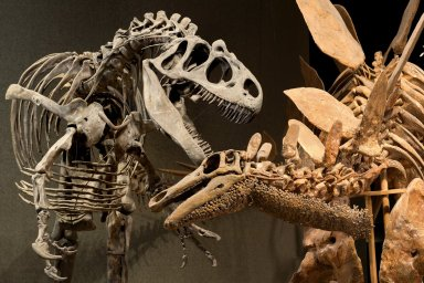 Stegosaurus and Allosaurus in Prehistoric Journey
