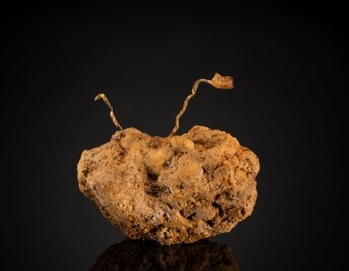 "Long flattened gold wire in soft matrix of limonite also known as ""Antenna Gold"""
