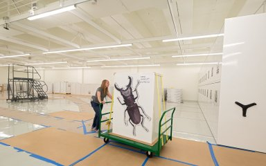 Museum interior - Zoology move to Avenir Collection Center