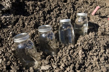 Fossils in jars