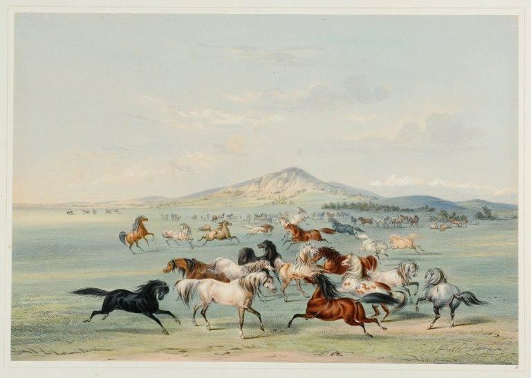 Wild Horses at Play.